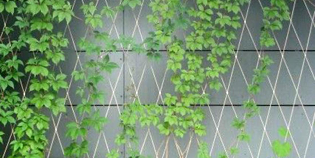 B ti v g tal landart actualit th matique j r mie koempgen archit - Plante toiture vegetalisee ...