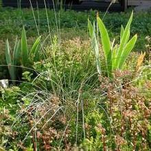 [8] Toiture végétalisée -  Climat, épaisseurs de substrat, drainage, entretien.